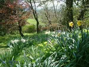 View of the woodland garden at Gors-lwyd Cottage Llithfaen Llyn Peninsula North Wales